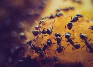 ants inside the colony