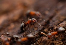 An ant on a mud
