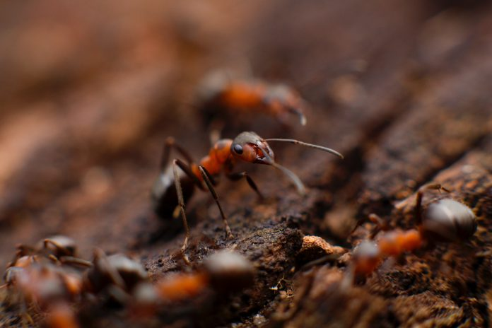 Amdro Ant Bait Review Solving Your Ant Problem In A Jiffy