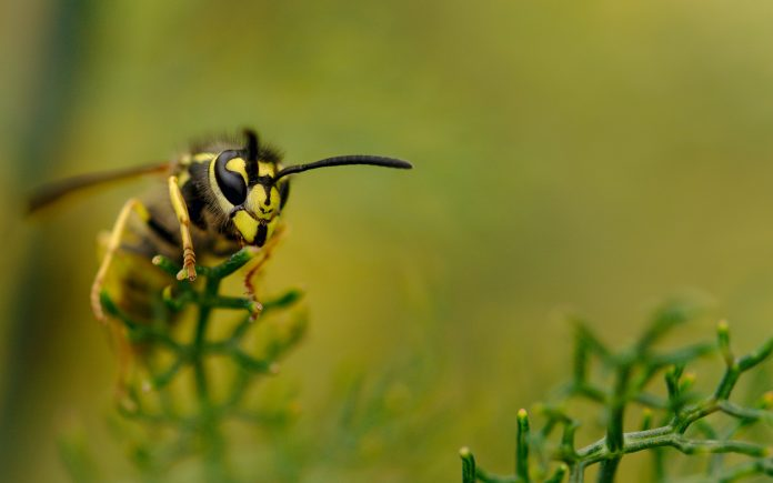 Wasp enjoying the sun on top of a plant