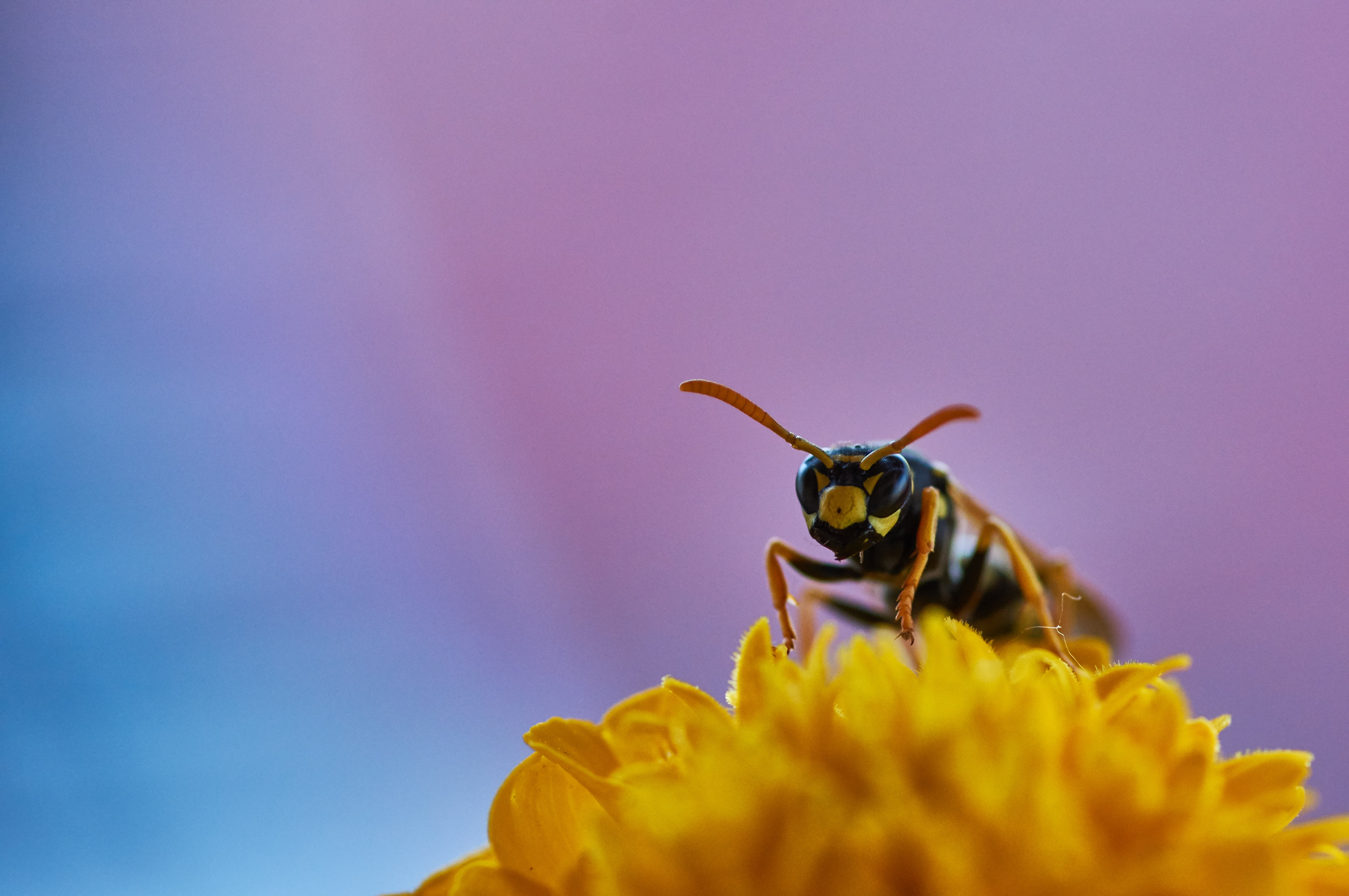 a wasp pearching on flower